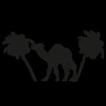 pustynia i wyjazdy freeride - Iran